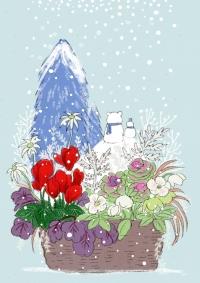 寄せ植え冬